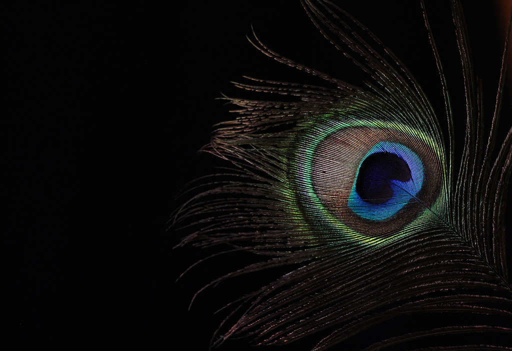 Eye in the dark... by sdutoit