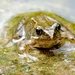 FROG by markp