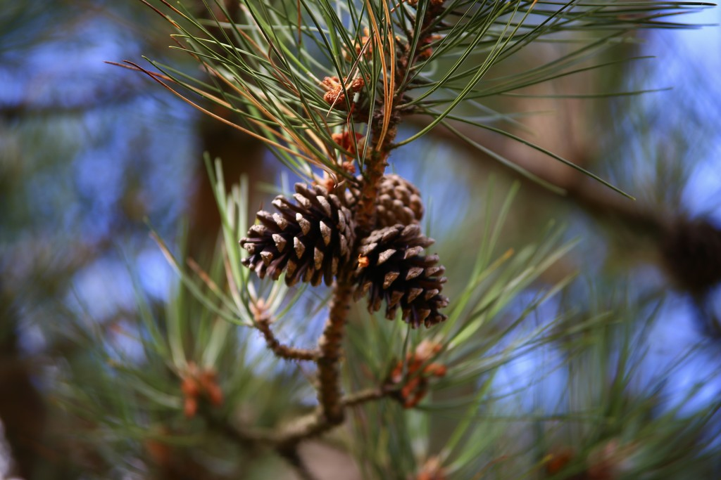 Fruit of the Pine by phil_sandford