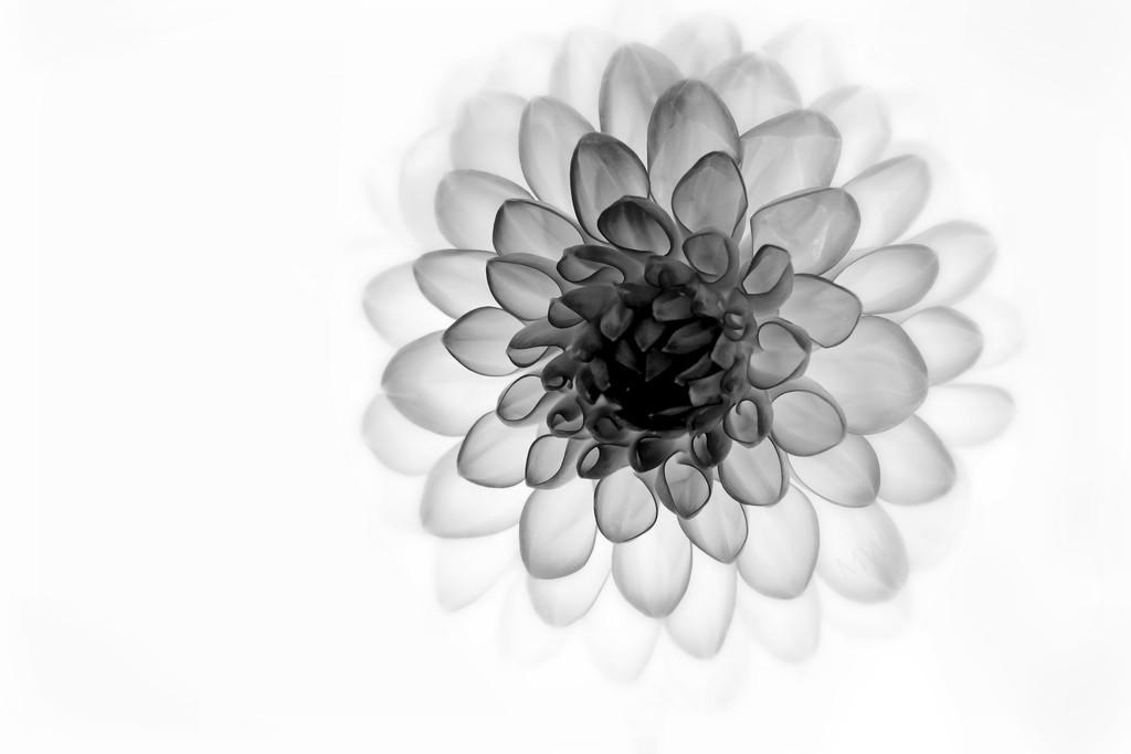 2017-08-24 dalia x-ray by mona65