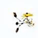 daisy twiddle by pistache