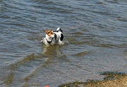 23rd Aug 2017 - Doggie Paddle.