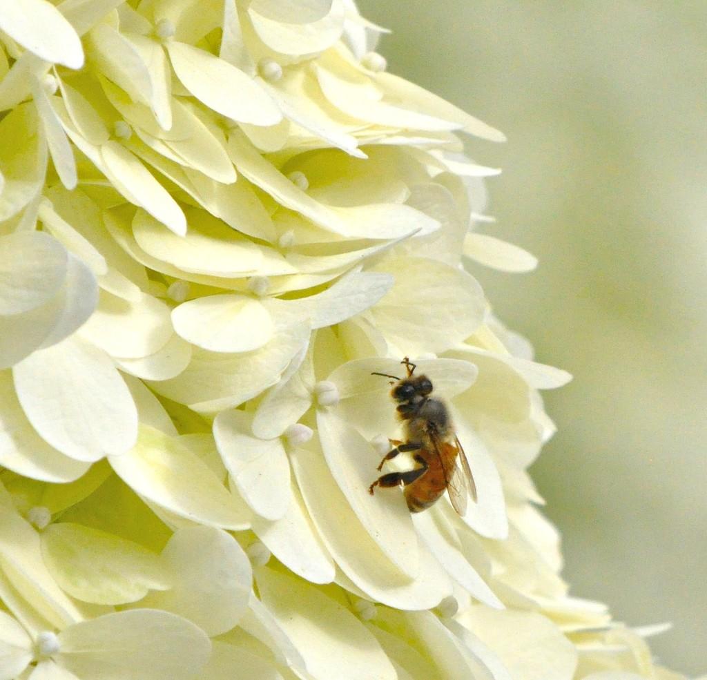 Bee-u-ti-ful........ by sailingmusic