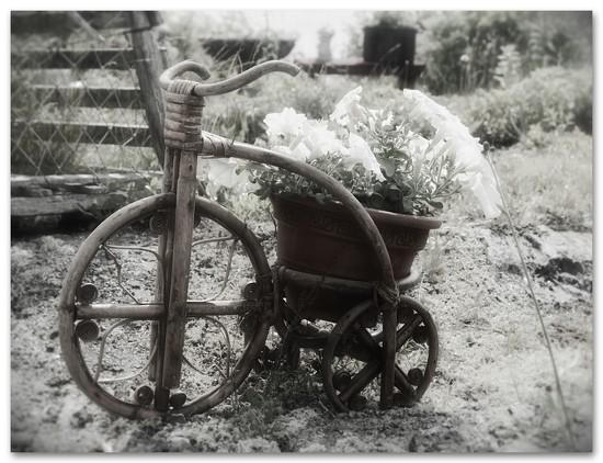 Tricycle  by joysfocus