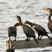 You shut-up! No, YOU shut-up, birdbrain! by shesnapped