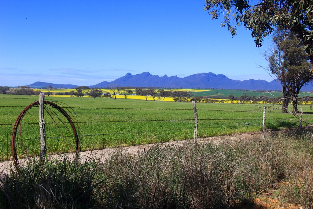 Wheat, Canola,  Ranges by landownunder