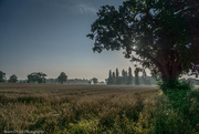 27th Aug 2017 - Early Morning Mist