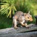 Squirrel in Natural Light by marylandgirl58