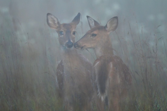 Young Companions in the Fog by kareenking