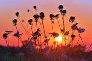 29th Aug 2017 - Evening Wildflowers