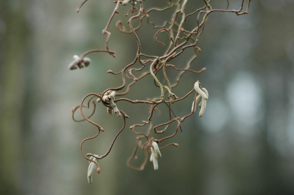 Winter sooc #3 by parisouailleurs