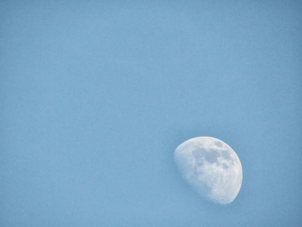 Mushroom Moon by grammyn
