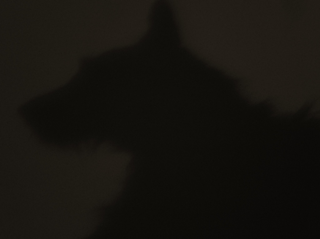 Guess whose silhouette this is ? by snowy