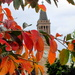 Autumn leaves  Brisbane by 777margo
