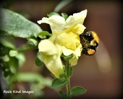 1st Sep 2017 - Bee have
