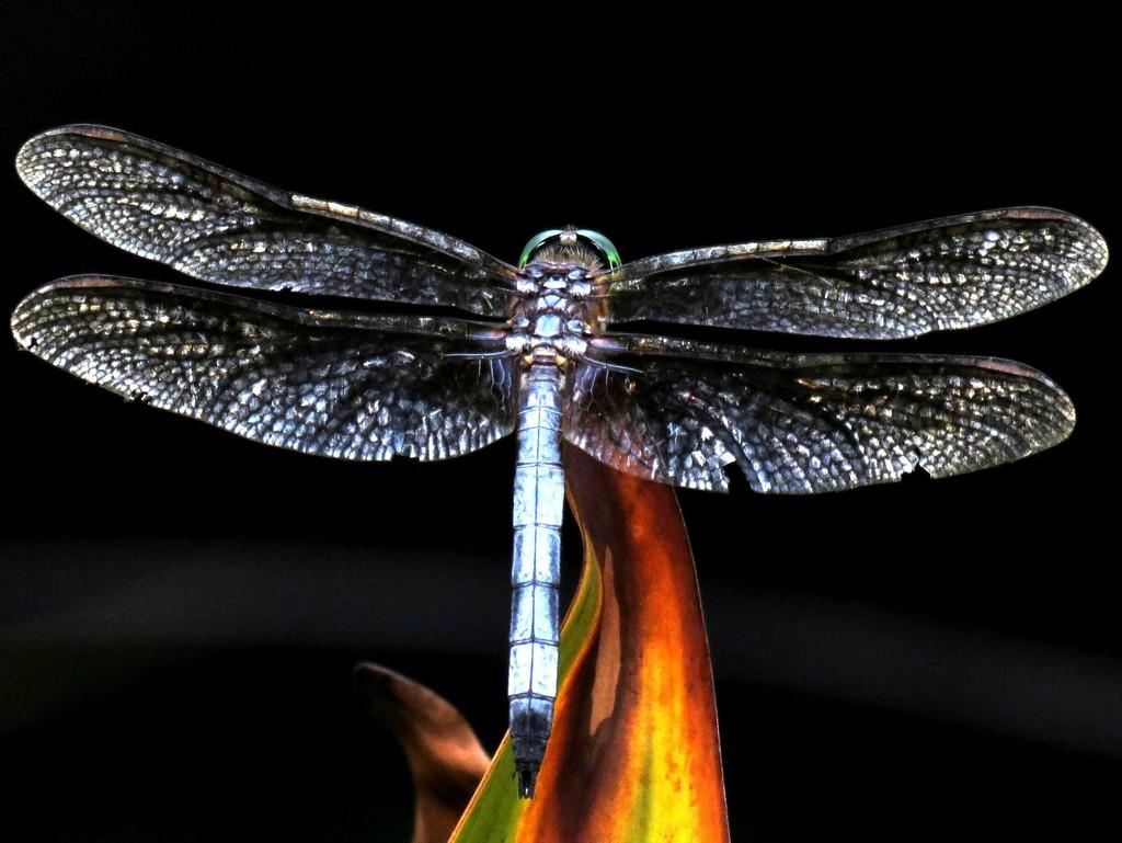 Like A Phoenix From the Flames by grammyn