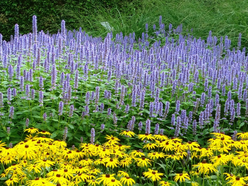 purple and yellow by gijsje