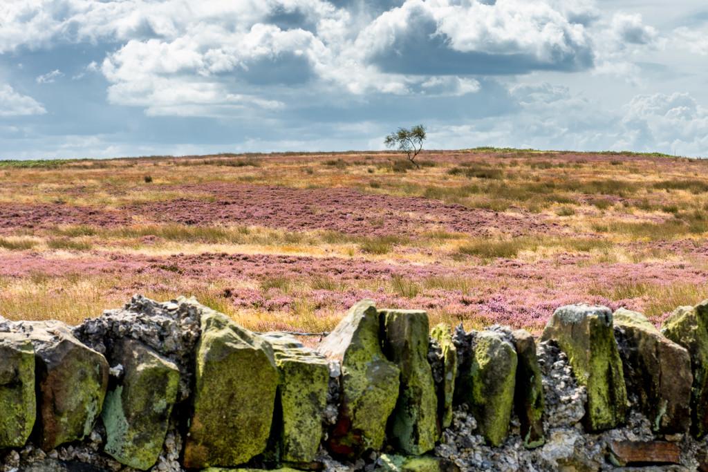 Moors  by rjb71