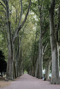 3rd Sep 2017 - NF-SOOC-2017 - Day 3: Platanes