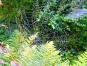 4th Sep 2017 - cobweb, a bit frayed