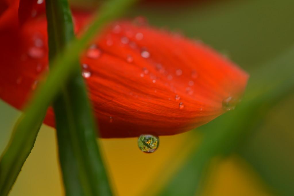 Garden scene in a droplet.......... by ziggy77