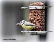 4th Sep 2017 - A big nut for a little bird