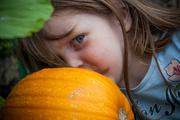 4th Sep 2017 - Pumpkin fairy