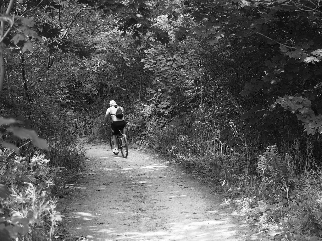 cyclist on the pedestrian path by northy