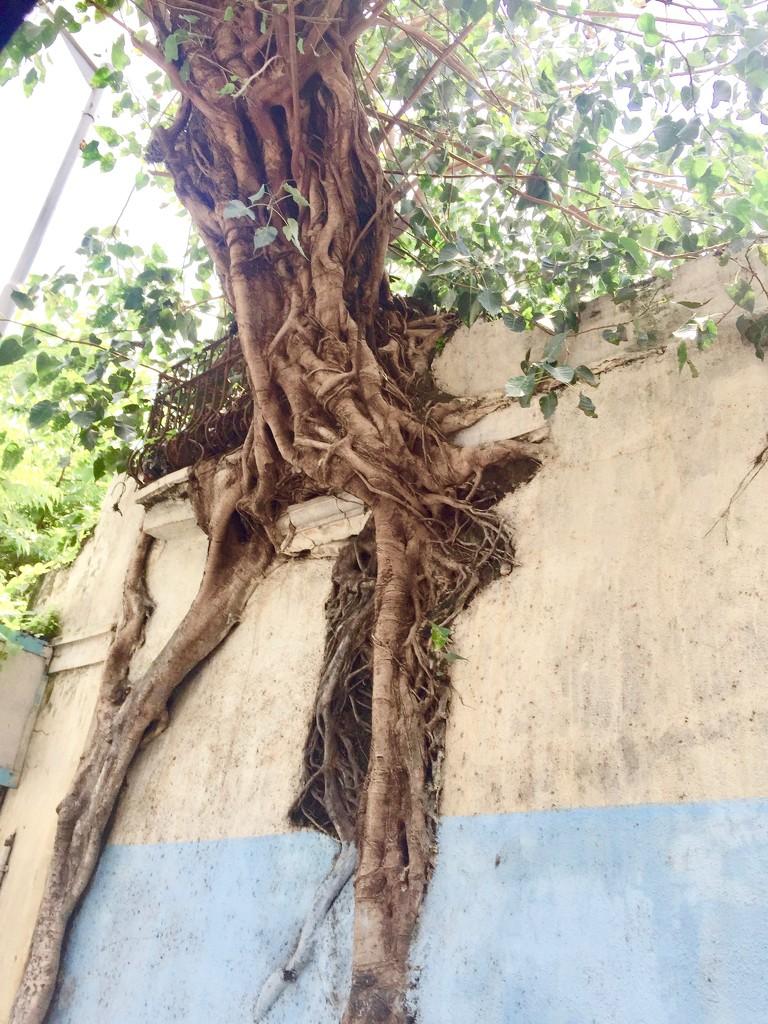 Roots by veengupta