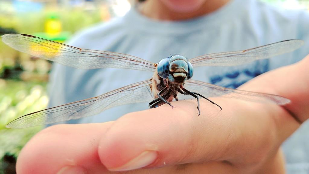 Dragonfly Whisperer by irishmamacita10