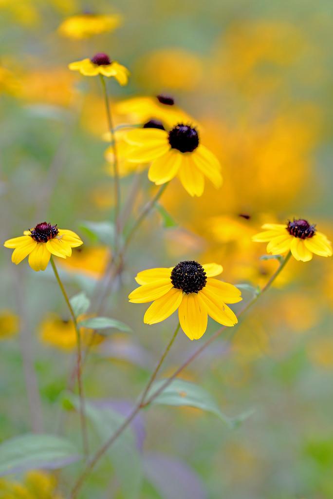 Beautiful Yellow! by fayefaye