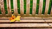 5th Sep 2017 - Leaf on bench