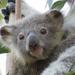 heart stealer by koalagardens