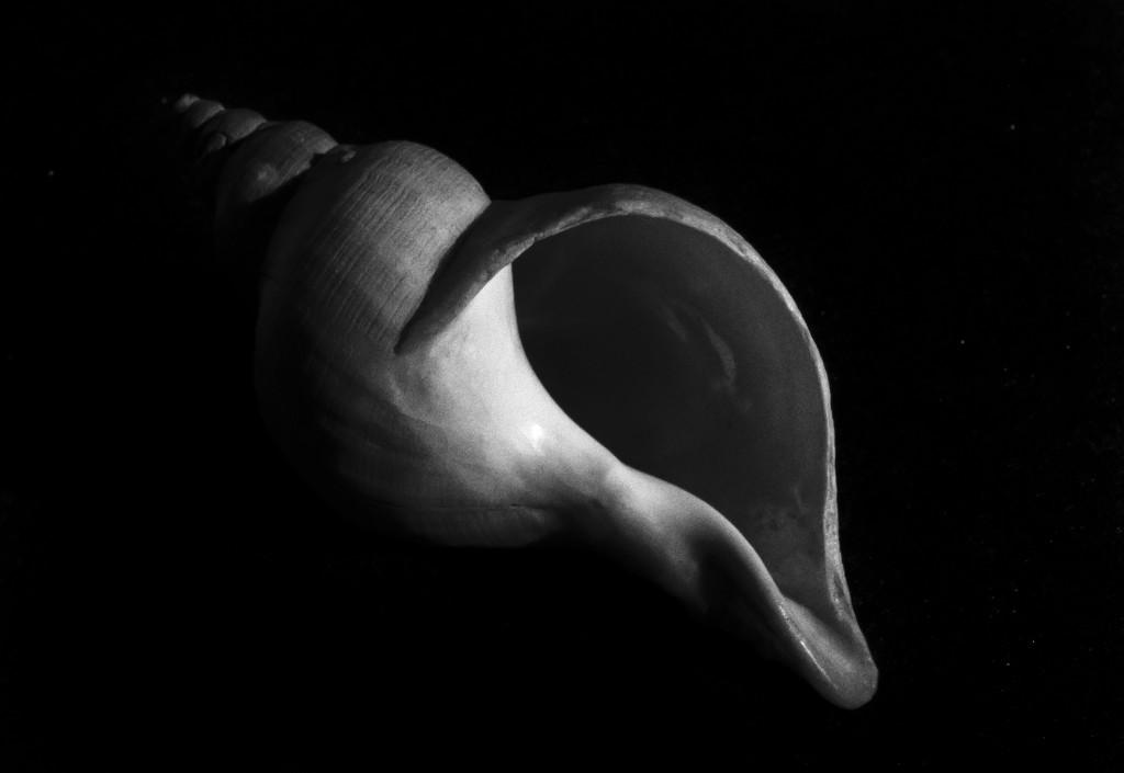 the seashell by haskar