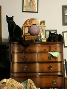 7th Sep 2017 - Cats on my dresser