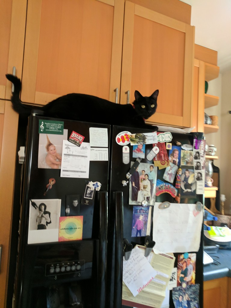 Trying to get the treats in the cupboard by bambilee