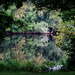 Late Summer Reflections