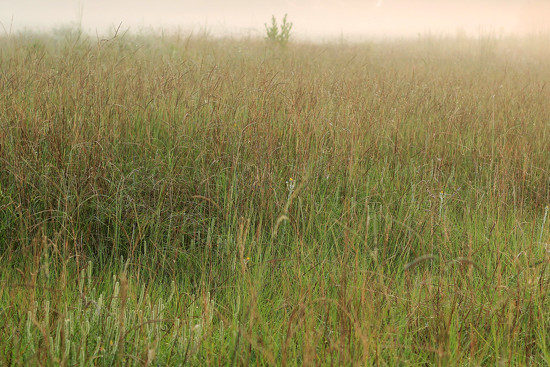 Fog on the Meadow by milaniet