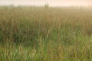 8th Sep 2017 - Fog on the Meadow