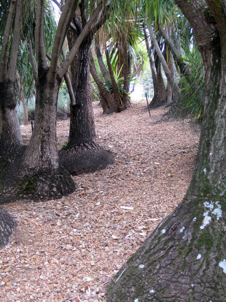 Like these unusual trees in   Roma Street  Gardens by 777margo