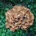 fungus by gijsje