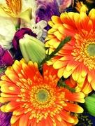 10th Sep 2017 - A Bouquet