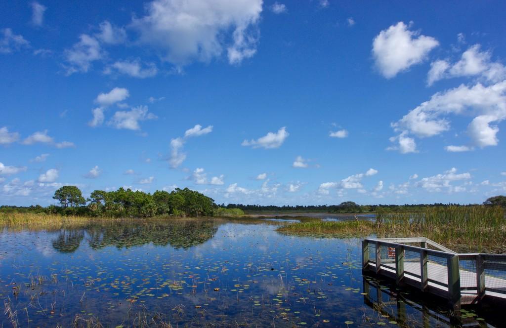 Wetlands by eudora