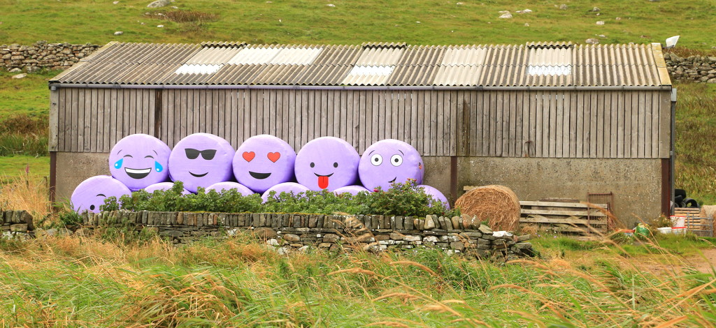 Happy Bales by lifeat60degrees