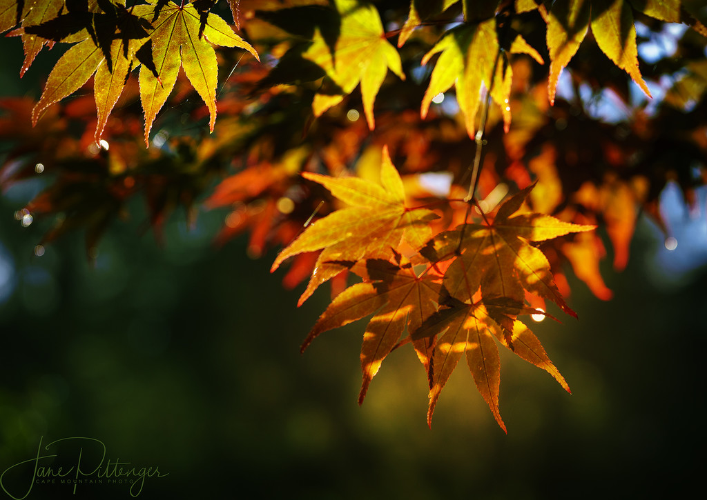 Raindrops, Bokeh, and Fall Color by jgpittenger
