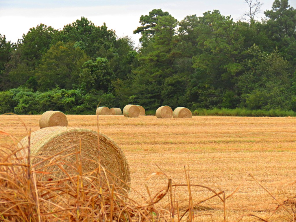 Make Hay While the Sun Shines by grammyn