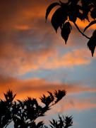 11th Sep 2017 - Sunset ....