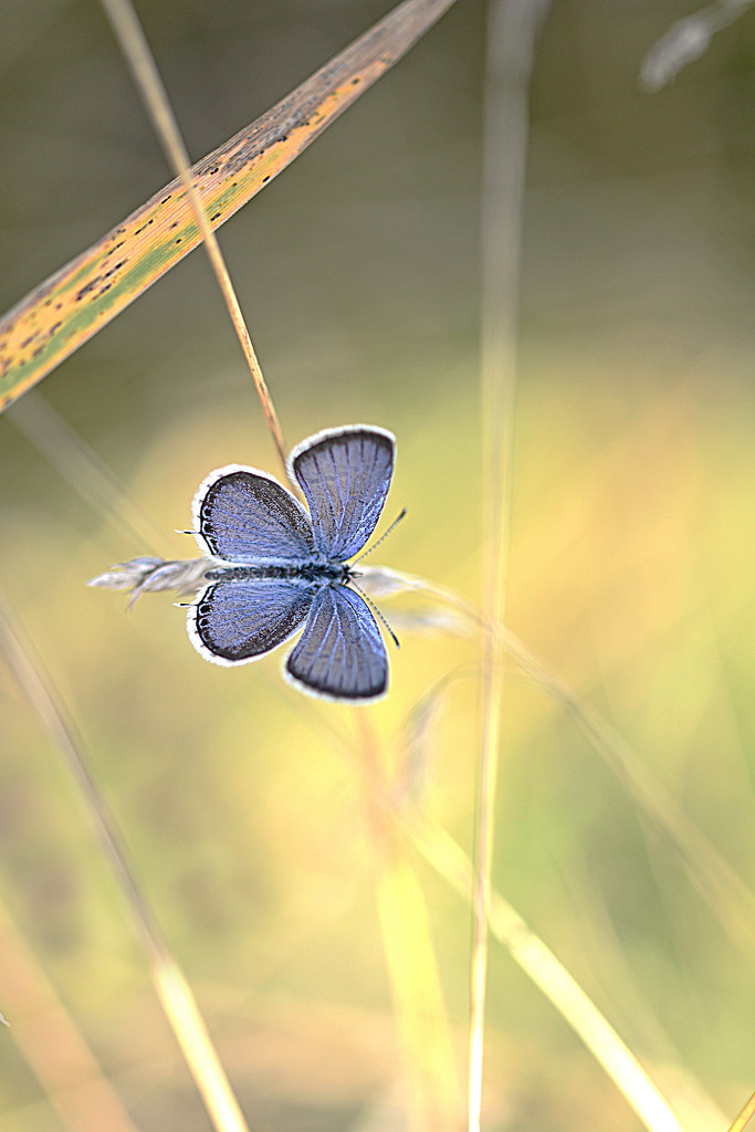 Small purple butterfly! by fayefaye