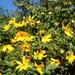 Bright spot in the garden