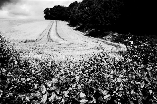 hedgerow with backdrop by pistache